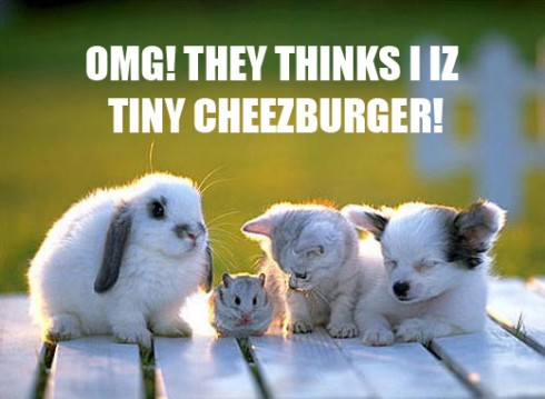 tiny-cheezburger-lee